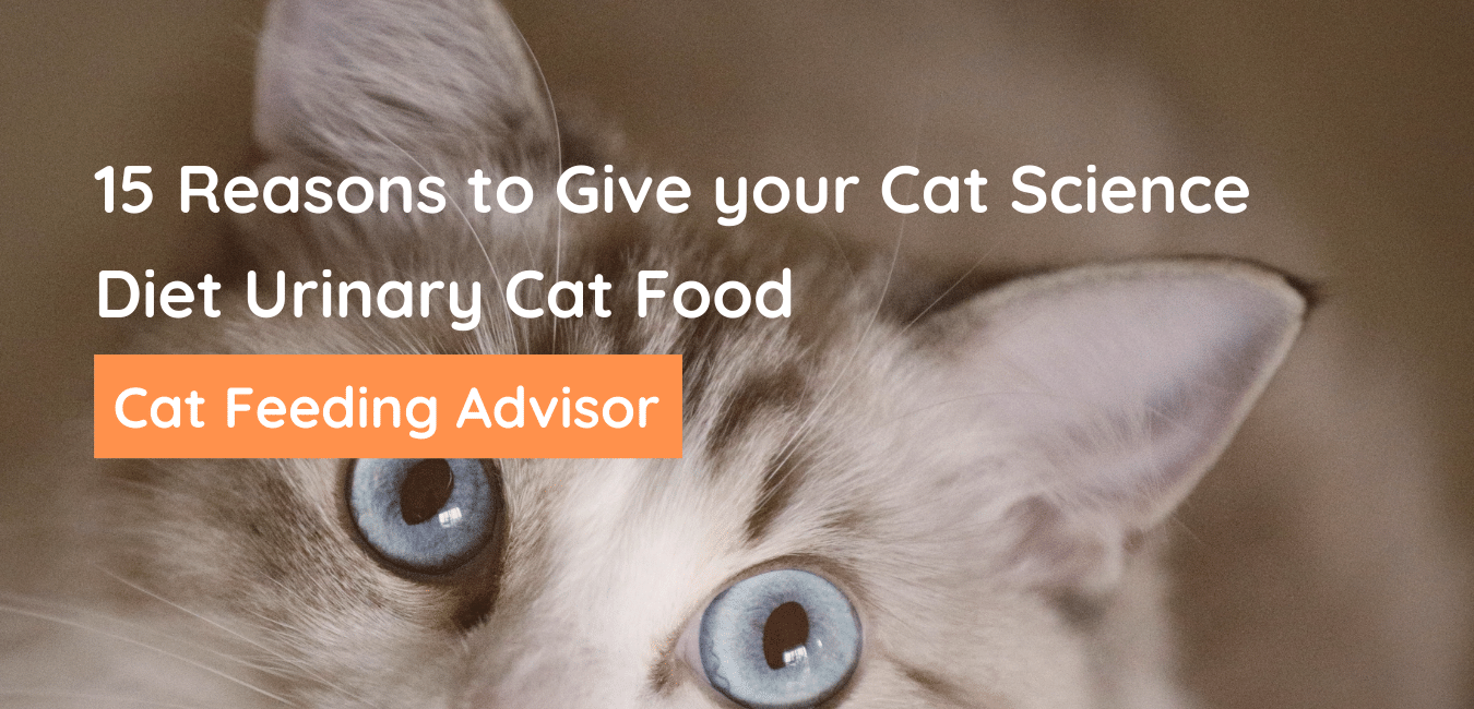 Science Diet Urinary Cat Food
